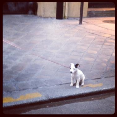 dog image(50)